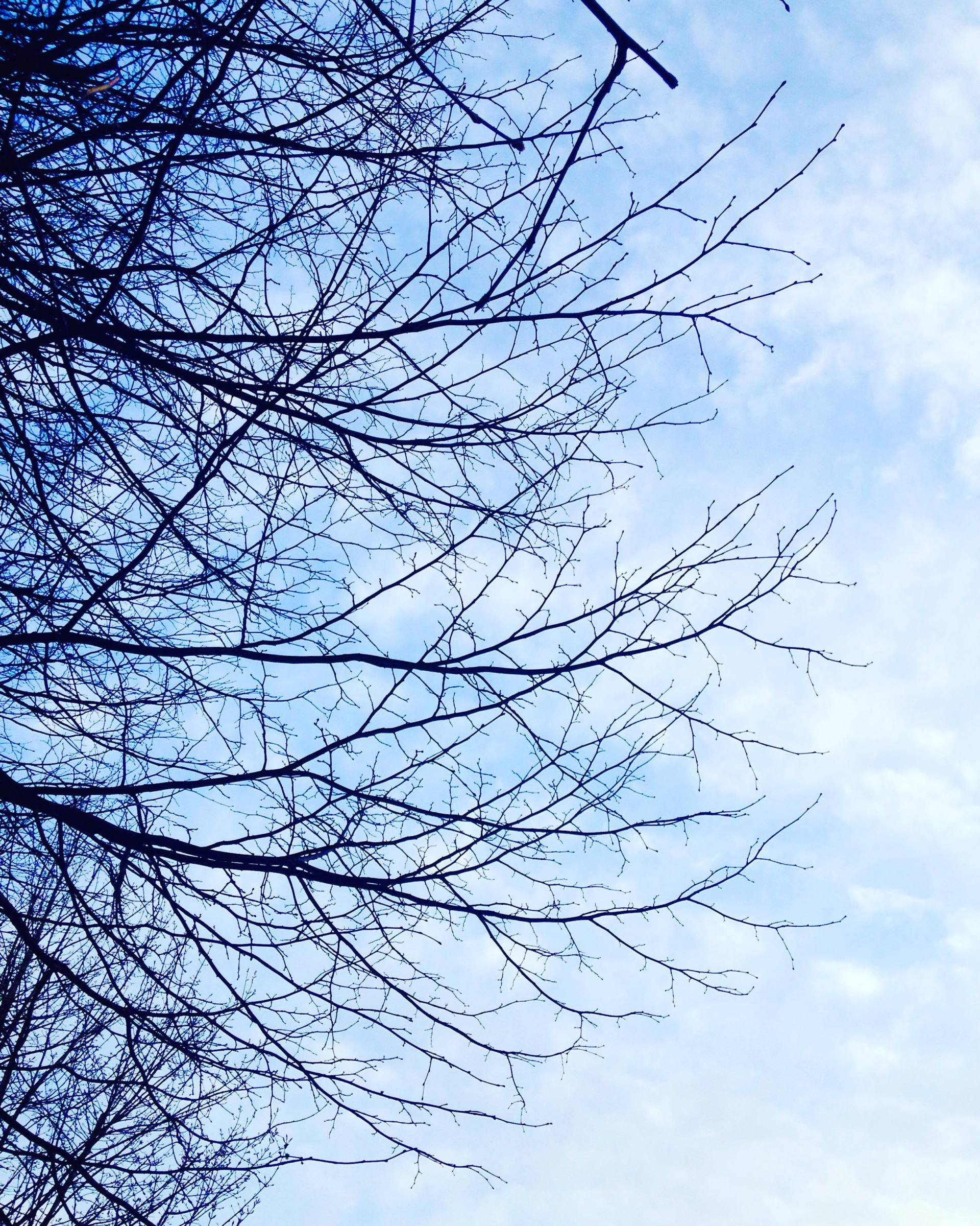 Morning run in Leeds with trees and blue skies