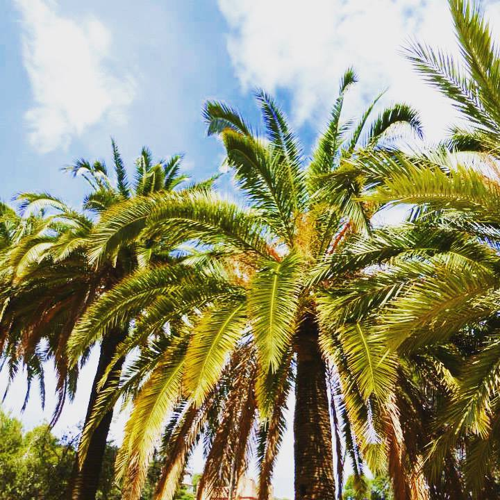 The little things I love about summer - palm trees in Barcelona