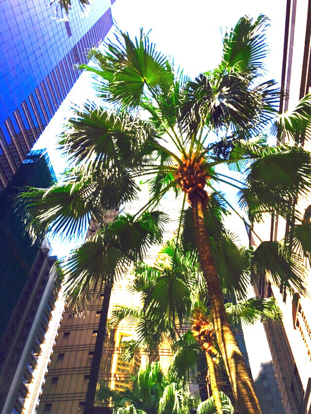 palm trees for days